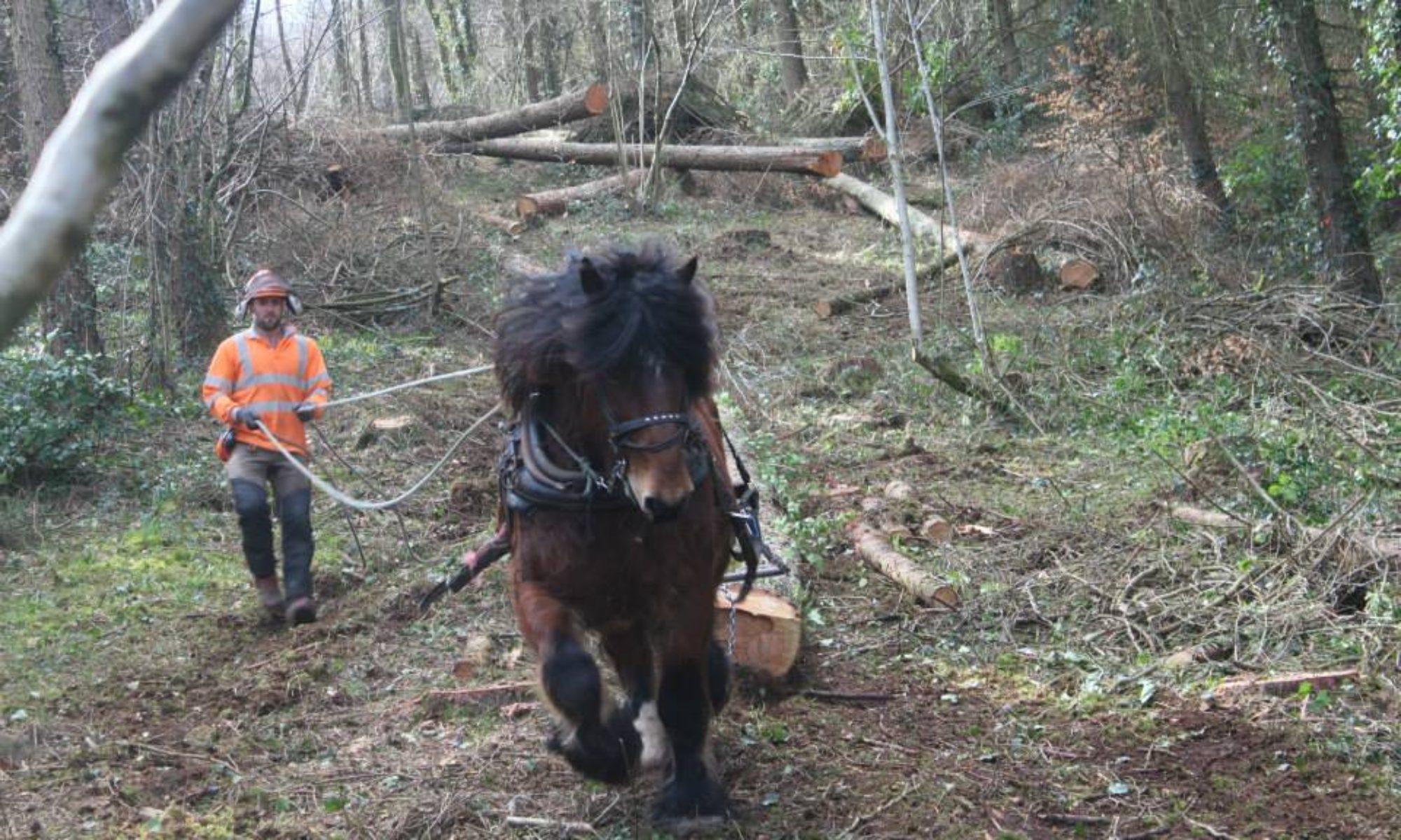 Dartmoor horse loggers